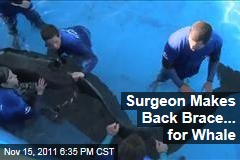 Surgeon, SeaWorld Make Back Brace for Pilot Whale