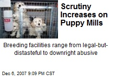 Scrutiny Increases on Puppy Mills
