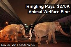 Ringling Pays $270K Animal Welfare Fine