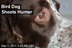 Bird Dog Shoots Hunter