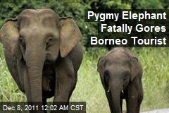 Pygmy Elephant Fatally Gores Borneo Tourist