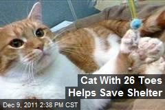 Cat With 26 Toes Helps Save Shelter