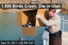 1,500 Birds Crash, Die in Utah