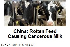China: Rotten Feed Causing Cancer Milk