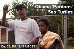 Sea Turtles 'Pardoned' by President Obama on Hawaii Vacation