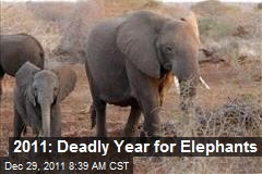 2011: Deadly Year for Elephants