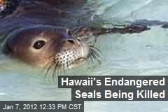 Hawaii's Endangered Seals Being Killed