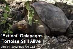 'Extinct' Galapagos Tortoise Still Alive