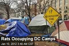 Rats Occupying DC Camps