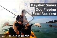 Kayaker Saves Dog Fleeing Fatal Accident
