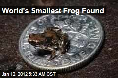 Paedophryne amauensis, World's Smallest Frog, Found in Papua New Guinea