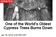 One of the World's Oldest Cypress Trees Burns Down