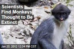 Scientists Find Miller's Grizzled Langur, Monkey Thought Extinct