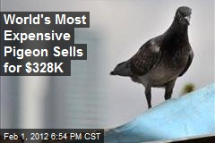 World's Most Expensive Pigeon Sells for $328K