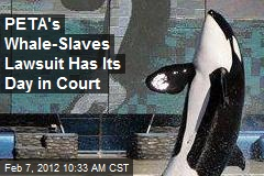 PETA's Whale-Slaves Lawsuit Has Its Day in Court