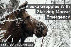 Alaska Grapples With Starving Moose Emergency