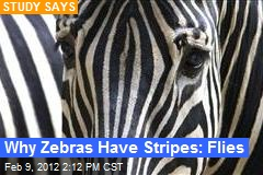 Why Zebras Have Stripes: Flies