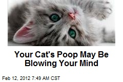 Your Cat's Poop May Be Blowing Your Mind