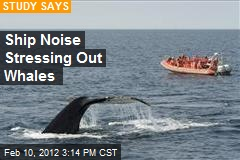 Ship Noise Stressing Out Whales