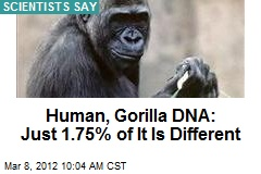 Human, Gorilla DNA: Just 1.75% of It Is Different