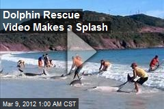 Dolphin Rescue Video Goes Viral