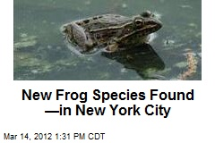 New Frog Species Found —in New York City