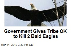 Government Gives Tribe OK to Kill 2 Bald Eagles