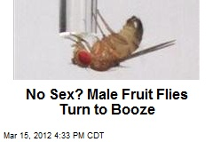 Rejected Male Fruit Flies Turn to Booze