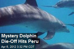 Mystery Dolphin Die-Off Hits Peru