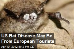 US Bat Disease May Be From European Tourists