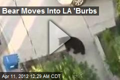 Bear Moves Into LA 'Burbs