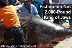 Fishermen Net 2,000-Pound King of Jaws