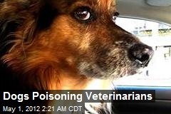Dogs Poisoning Veterinarians