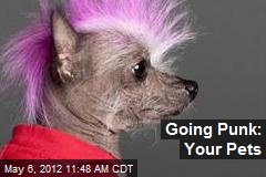 Going Punk: Your Pets