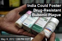 India Could Foster Drug-Resistant Bubonic Plague