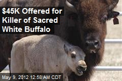 $45K Offered for Killer of Sacred White Buffalo