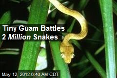 Tiny Guam Battles 2 Million Snakes
