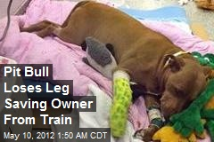 Pit Bull Loses Leg Saving Owner From Train