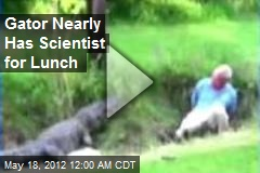 Gator Nearly Has Scientist for Lunch