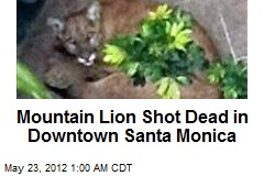 Mountain Lion Shot Dead in Downtown Santa Monica