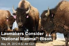 Lawmakers Consider 'National Mammal': Bison