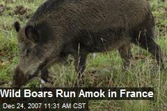 Wild Boars Run Amok in France