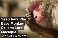 Searchers Play Baby Monkey Calls to Lure Macaque