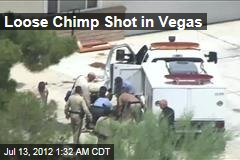 Loose Chimp Shot in Vegas