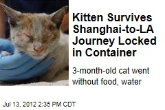 Kitten Survives Shanghai-to-LA Journey Locked in Container