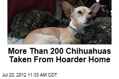 More Than 200 Chihuahuas Taken From Hoarder Home