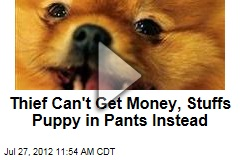 Thief Can't Get Money, Stuffs Puppy in Pants Instead