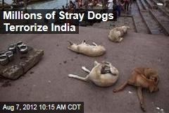 Millions of Stray Dogs Terrorize India