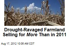 Drought-Ravaged Farmland Selling for More Than in 2011