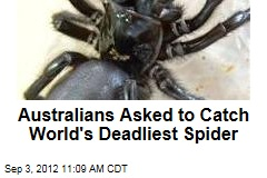 Australians Asked to Catch World's Deadliest Spider